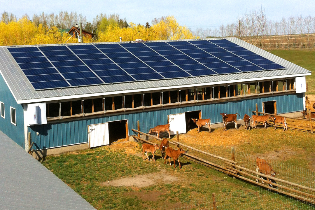 Alberta farmers are now harvesting solar power skyfire for Solar ranch